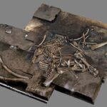 Archaeologists Find 300,000-Year-Old Elephant Skeleton in Germany