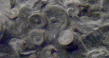 300 Million Year Old Machinery Found In Russia