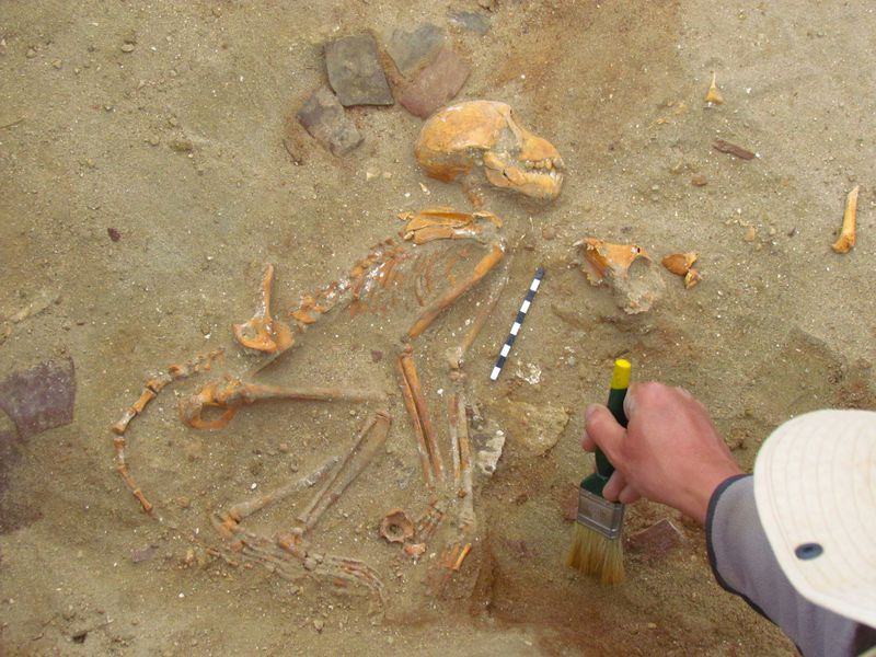 Monkeys Found Buried in 2,000-Year-Old Egyptian Pet Cemetery