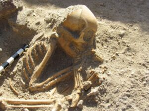 A 2,000-year-old monkey skeleton unearthed by archaeologists in the Egyptian port of Berenice