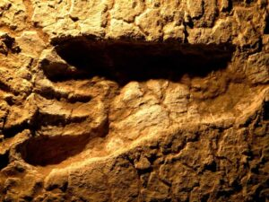 An Environment Ministry photograph of an ancient human footprint in the Mungo National Park.