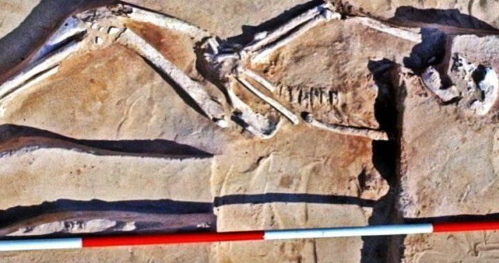 42,000-year-old Mungo Man Skeleton has been Found in Australia