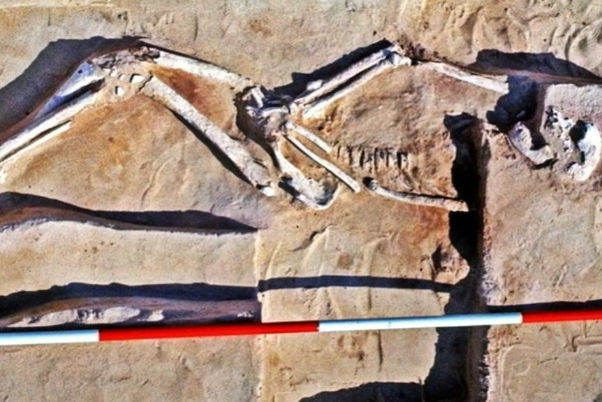42,000-year-old Mungo Man skeleton has been discovered in Australia