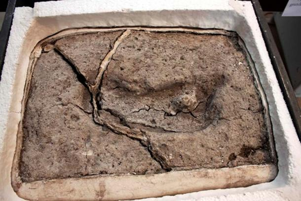 Discovery of 15,600-year-old Footprint That Could Change the History of the Americas