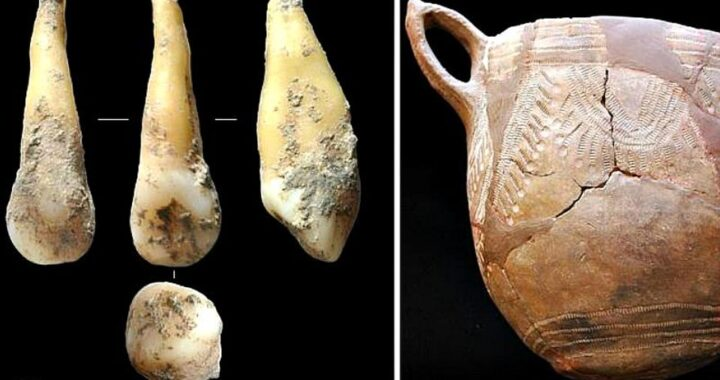 4,700-Year-old Tooth provides insight on Iberian Peninsula First Farmers