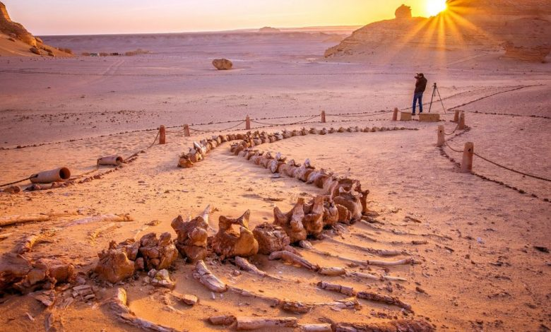 Not Far From the Ancient Egyptian Pyramids Is a Valley of Whales Millions of Years Old