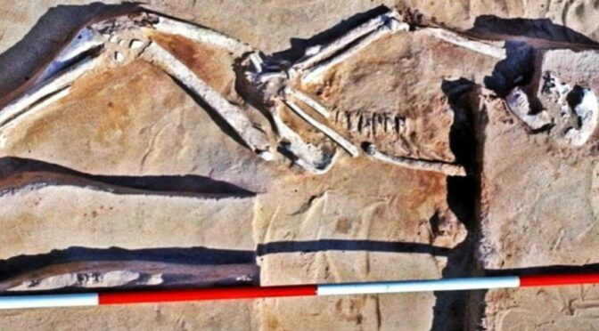 42,000 years old Mungo Man skeleton, the oldest human remains found in Australia