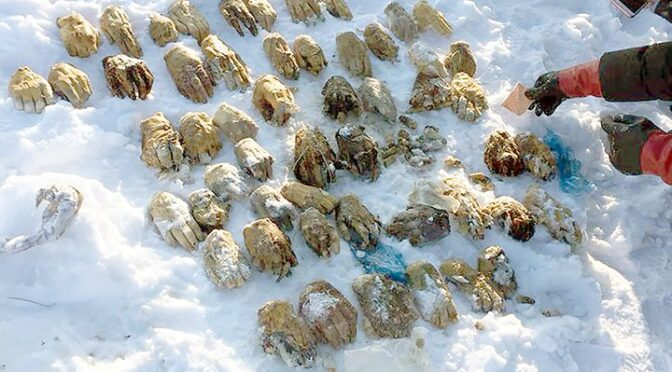 A mysterious bag containing 54 severed human hands found in Russia