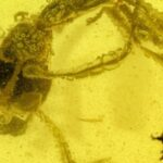 Prehistoric 'Hell Ant' Stuck in Amber Has Been Biting Its Prey For 99 Million Years