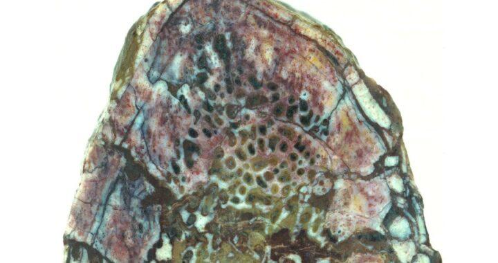 Ancient tissue found in 195 million-year-old dinosaur rib