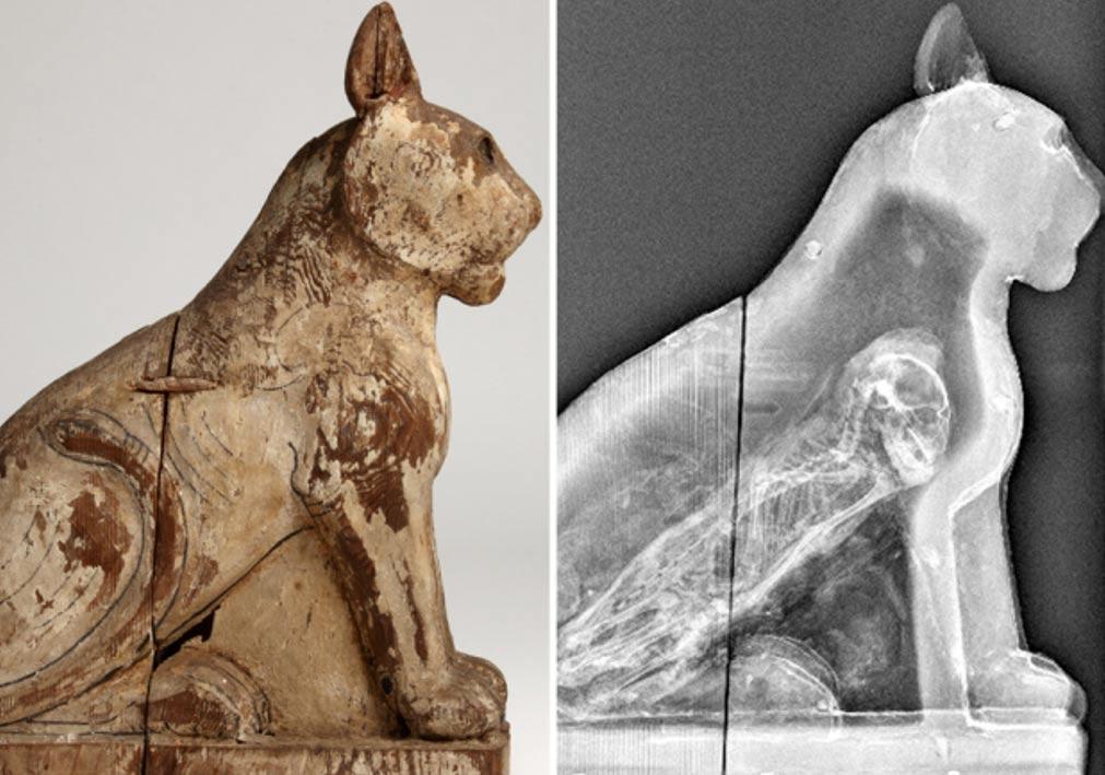 70 Million Mummified Animals in Egypt Reveal Dark Secret of Ancient Mummy Industry