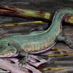 Earliest EVER footprints of amphibian found in Britain