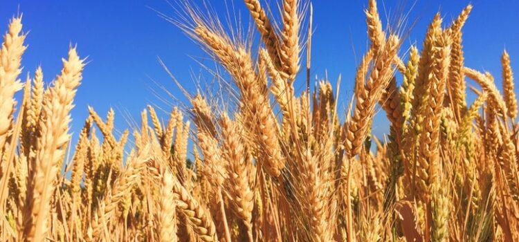 October 2021 – Harvest Thanksgiving