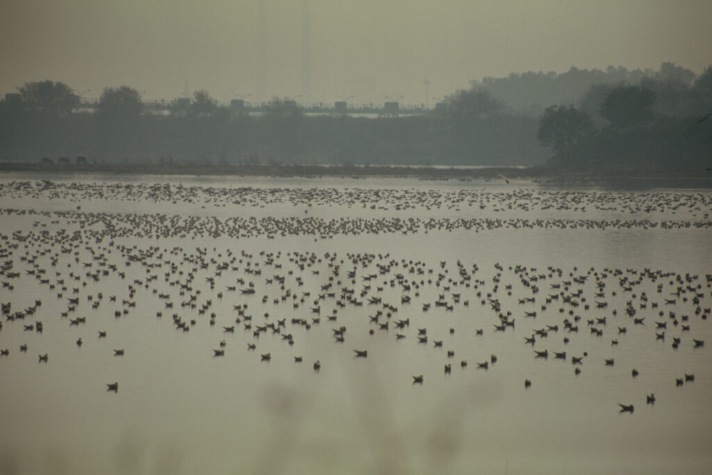 Okhla Bird Sanctuary