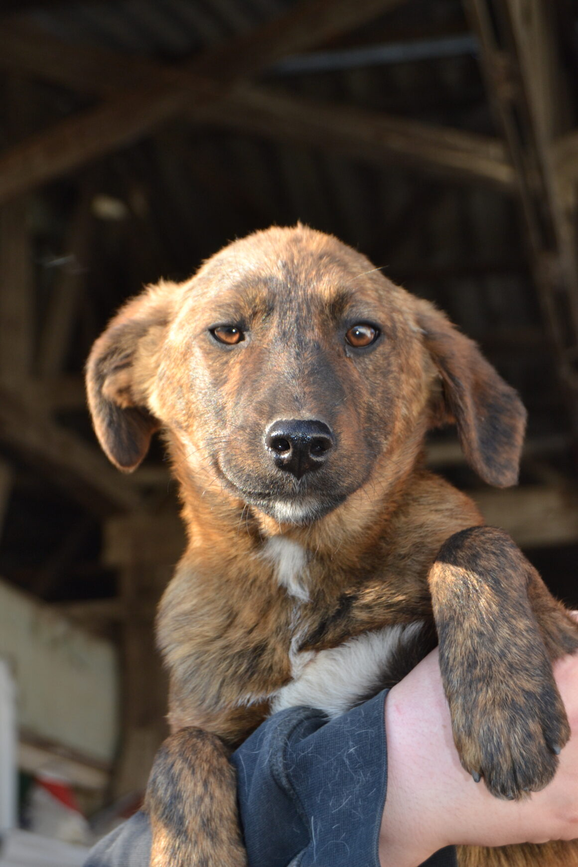 Dopey  – reserved