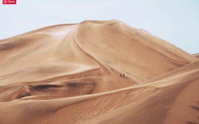 Vertoro takes aim at a Saudi-Arabia-like role in the bio-based economy