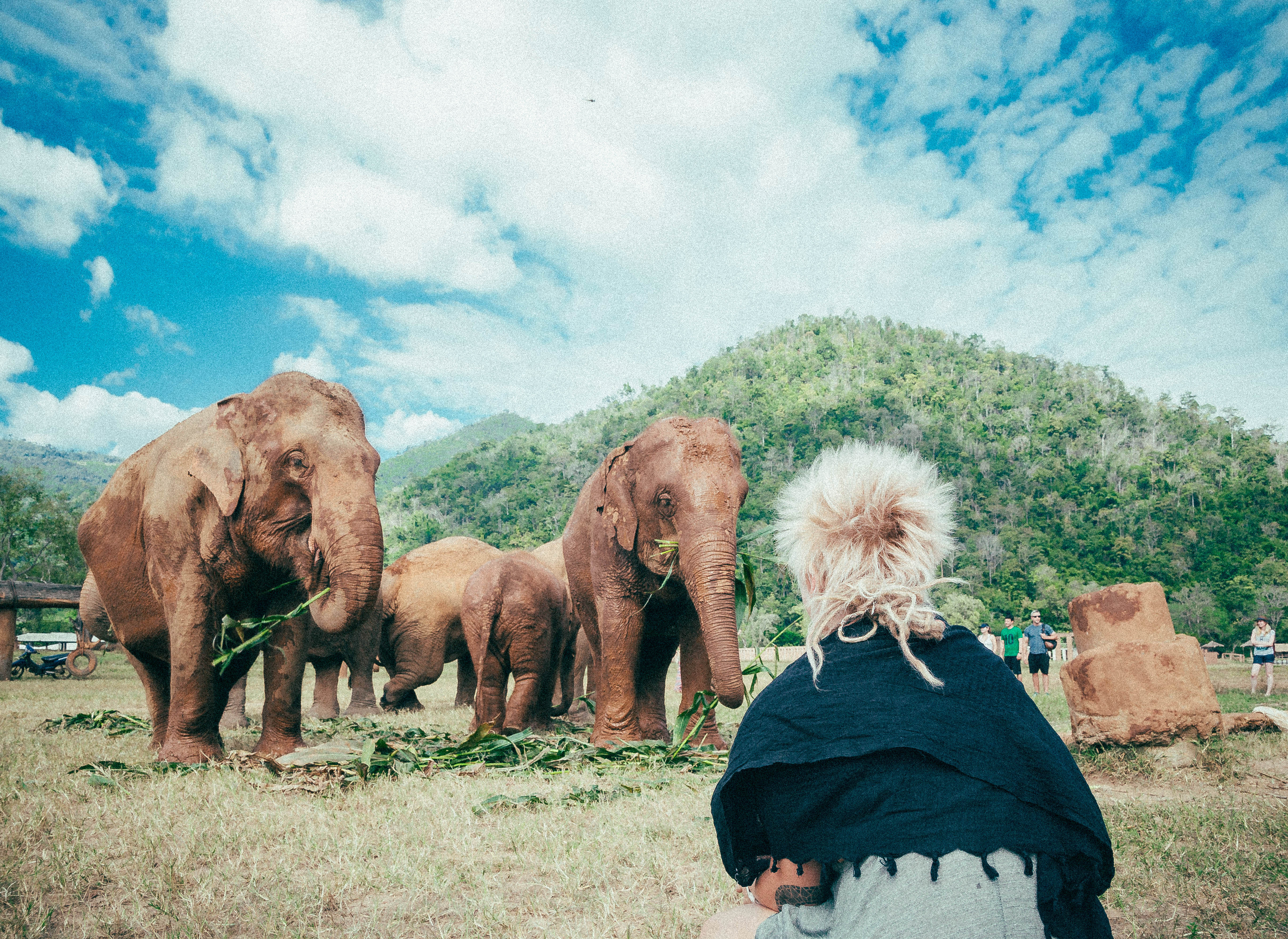 sitting and watching elephants having food in elephant nature park thailand chiang mai