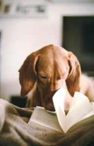 dog looking in a book