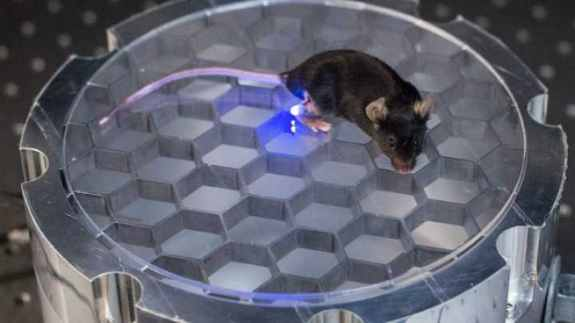 device used to control mice behaviour
