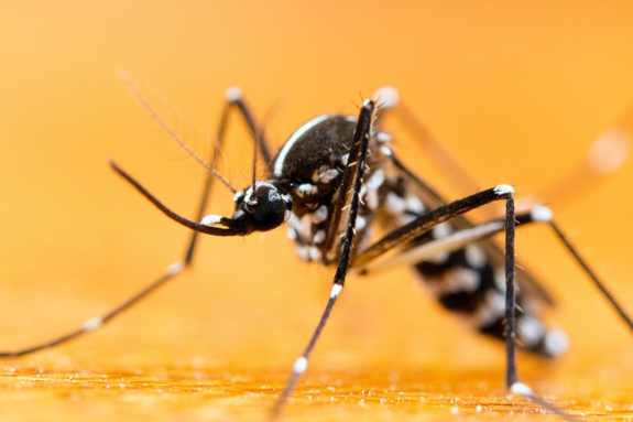 Mosquitoes buzz in ears
