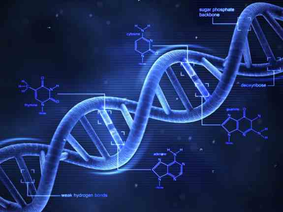 Human Cells Can Convert RNA Sequence Back Into DNA