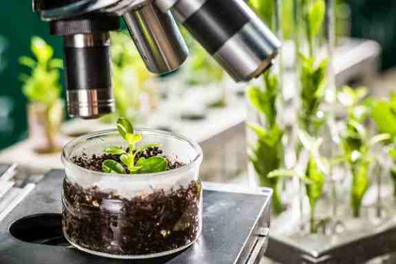 New Tools Needed To Prevent Spread of Plant Pandemics