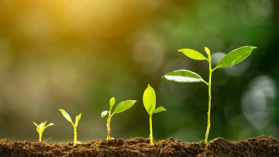 Agriculture plant seeding growing step concept in garden and sunlight  life