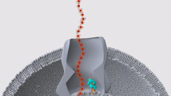 Scientists Discover On-Off Switch Of An Electrically Breathed Bacteria