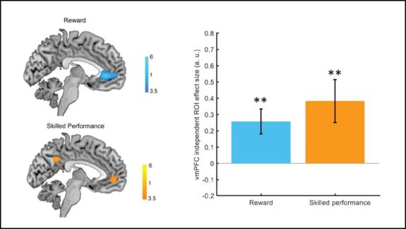Activity in vmPFC shows modulation by both reward magnitude and skilled performance.