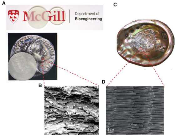 (A) Glass composite (without index-matching strategy on left & with index-matching on right), (B) Glass composite's microstructure, (C) View of the nacreous layer in red abalone shell, & (D) Nacre's microstructure.