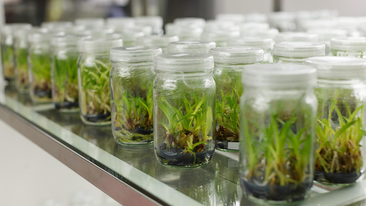 Tissue Culture Technology – Types, Techniques and Process