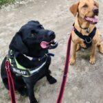 Hugo & Bertie