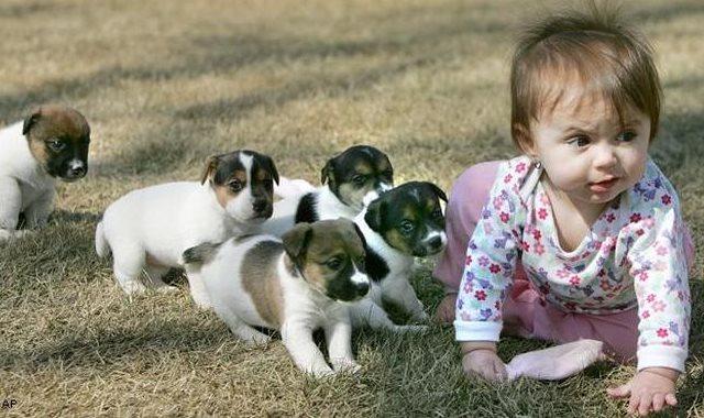 أتفرج على الكلاب الصغيرة وهي بتلعب مع طفل وتقوم بإضحاكه