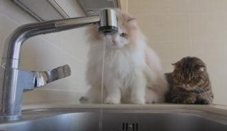 قطط روعه بتلعب فالحوض ومش خايفة من الميه