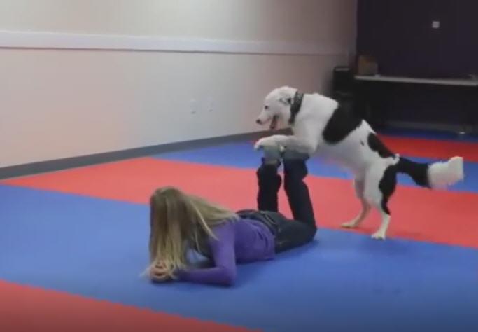 بنت بترقص مع الكلب مش هتصدق اللى بيعملوه