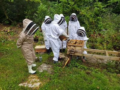 People around bee hive