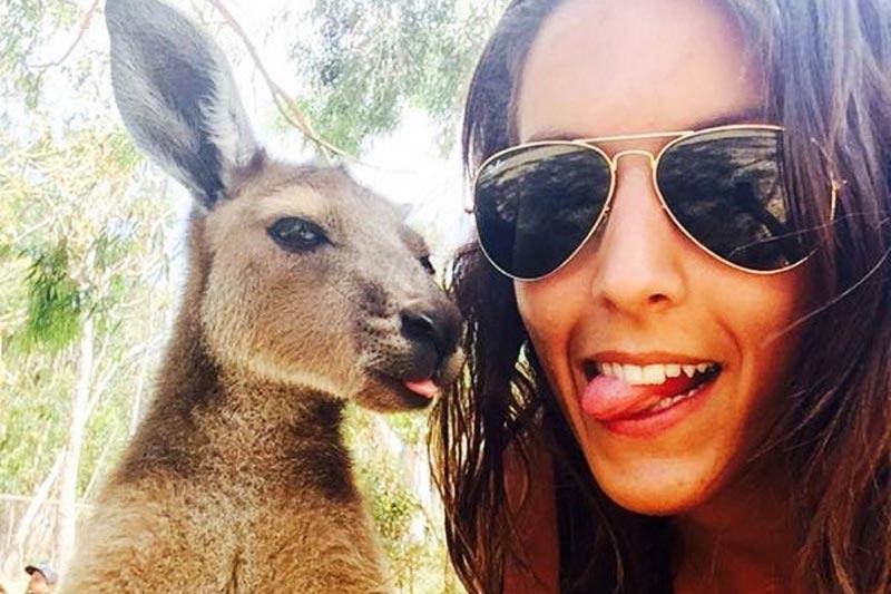Meeting the kangaroos and koalas