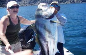 Rooster Fish - Catch and Release Costa Rica
