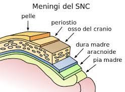 meningi-snc