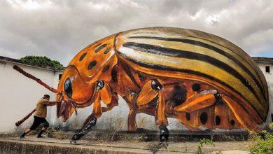 صورة حشرات عملاقة تظهر في شوارع البرتغال