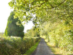 The lane outside Valley View.