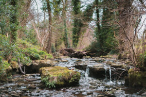 The stream running through our woodland.
