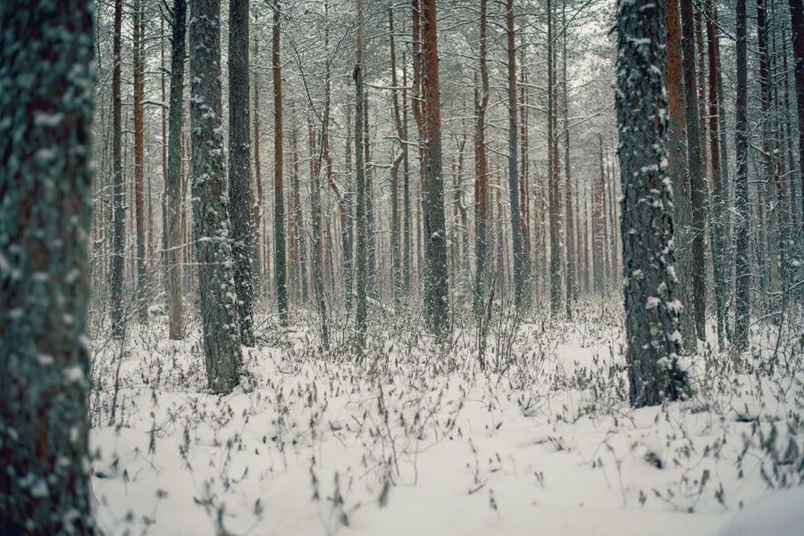 Winter seasonal yoga retreat