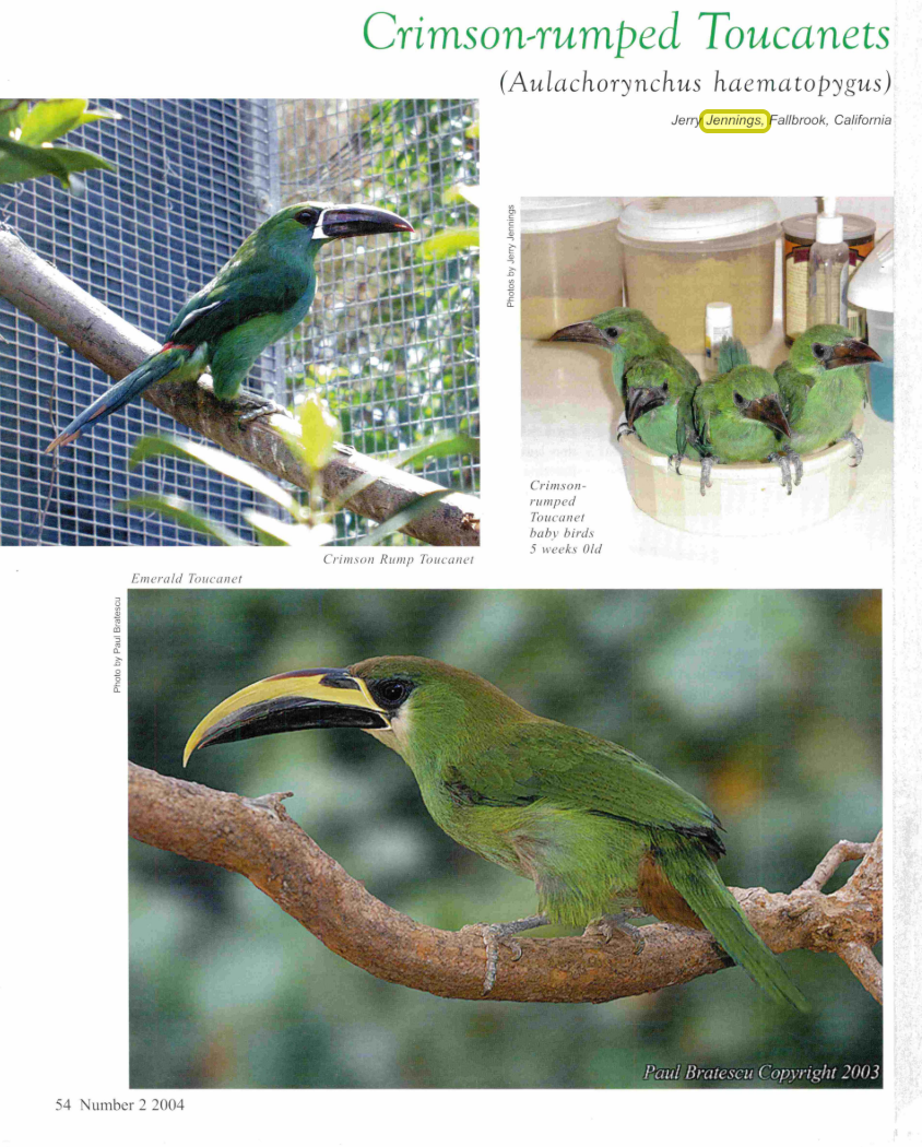 Crimson-rumped Toucanets