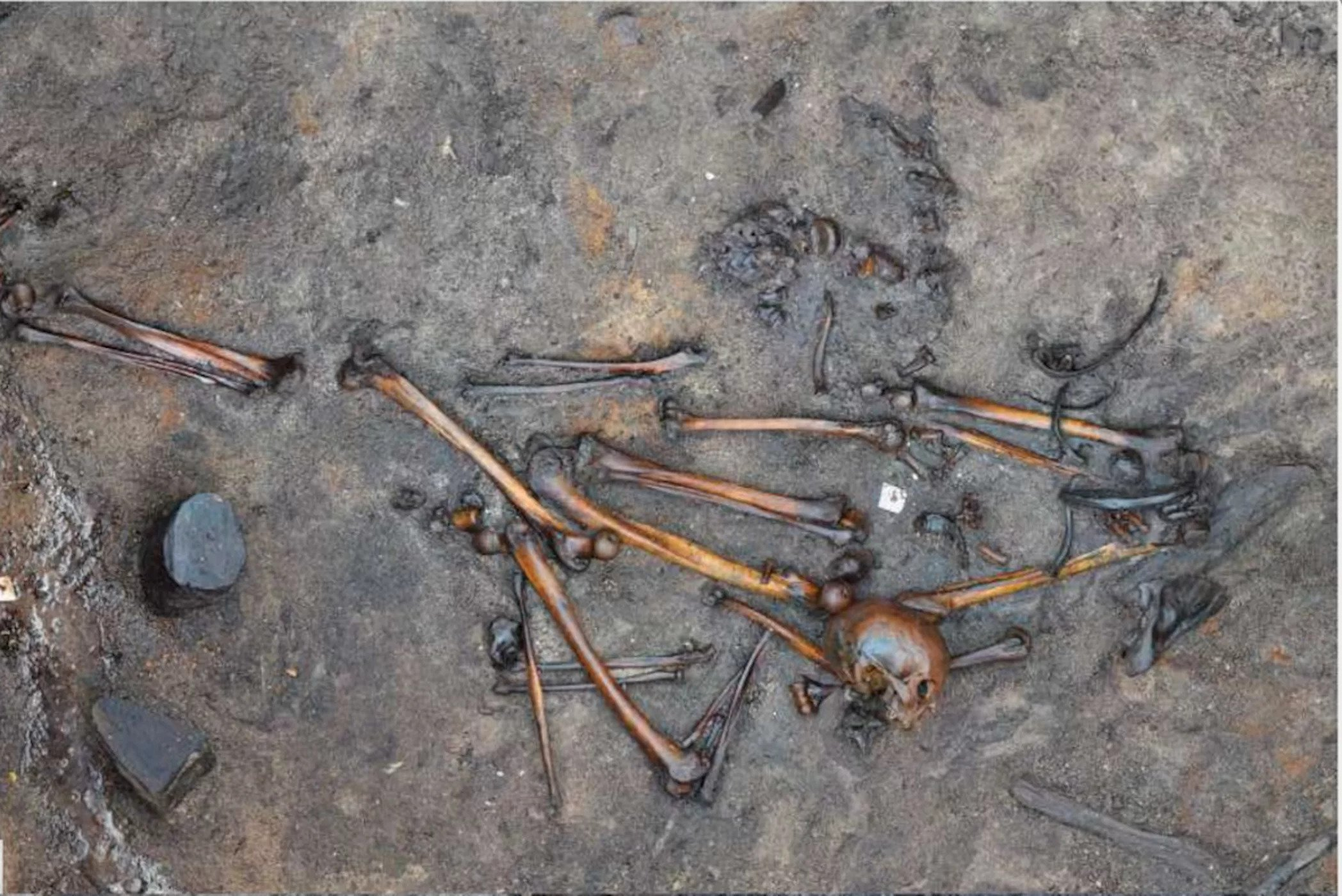 One of the nearly 400 slaughtered barbarians thought to be buried at Alken Enge in Denmark.