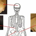 Six skeletons with signs of cancer found in an ancient Egyptian cemetery