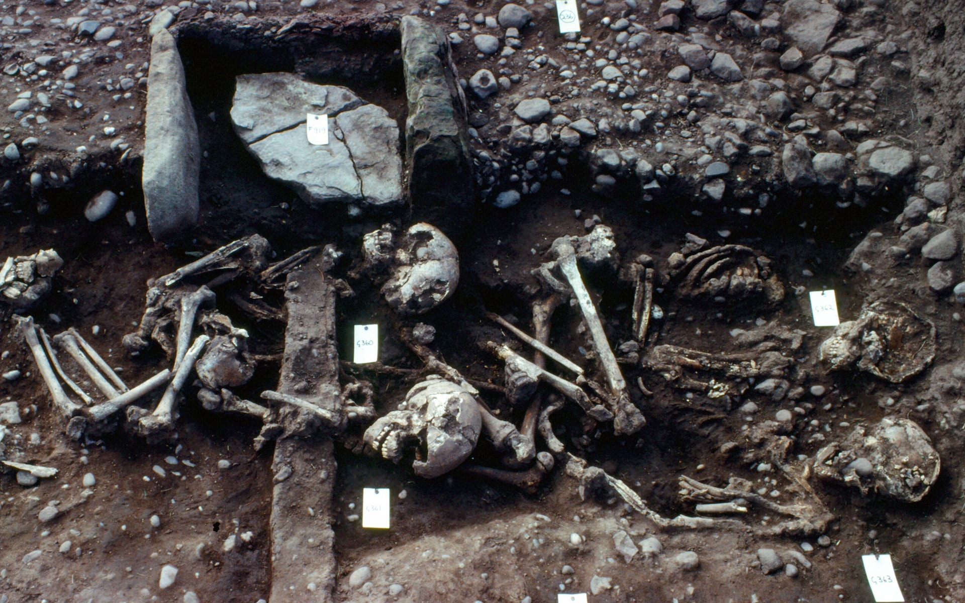 Mass grave of Viking army contained slaughtered children to help dead reach afterlife, experts believe