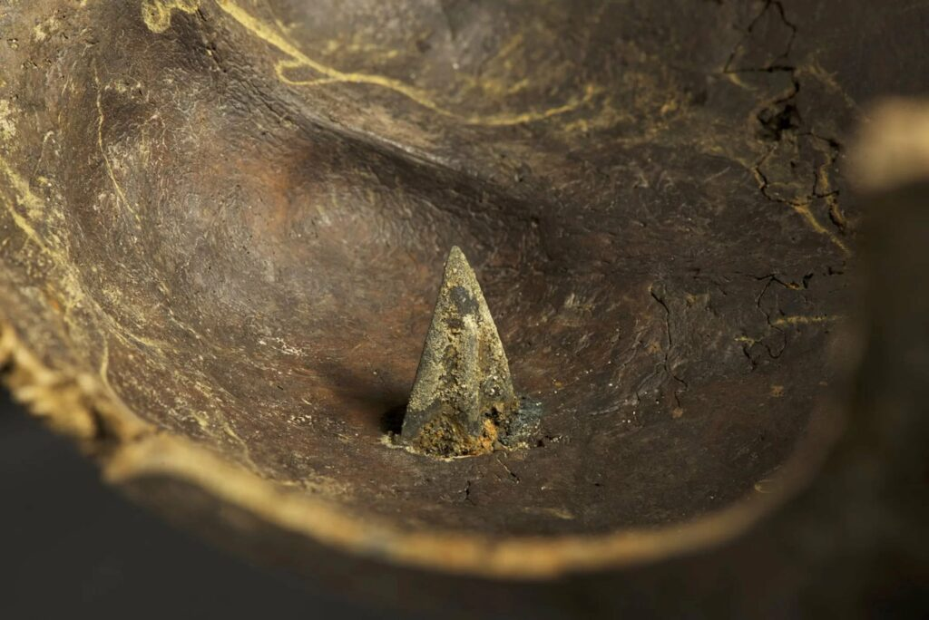 A skull with a bronze arrowhead in it was found at the Tollense site.
