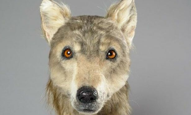 Here's What Scotland's Dogs Looked Like 4,500 Years Ago