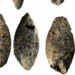 A 5,000-year-old barley grain discovered in Finland changes the understanding of livelihoods